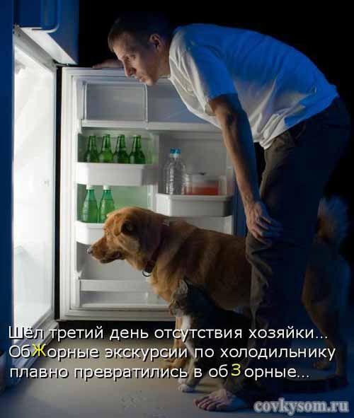 Обжорные экскурсии по холодильнику. Подборка забавных фотографий с подписями.