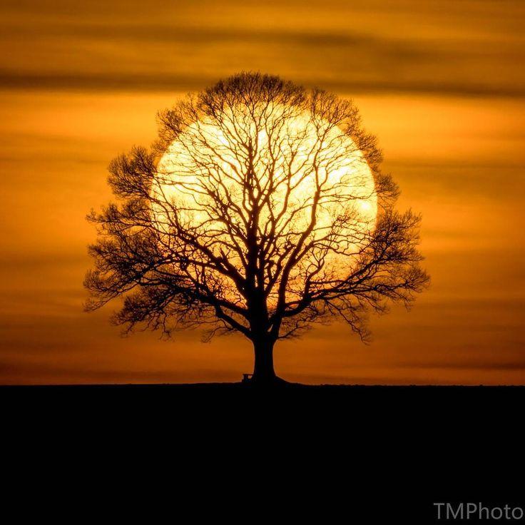 """Tobias Messerli (Taylor Made-Photography.ch) on Instagram: """"Sonnenbaum Ich freue mich sehr, dass mein Bild """"Sonnenbaum"""" beim Wettbewerb I AM 100…"""