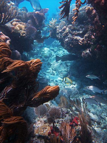 Snorkeling in Sombrero Reef, Florida Keys.