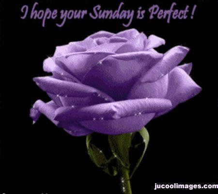 I Hope Your Sunday Is Perfect! good morning sunday sunday quotes happy sunday…