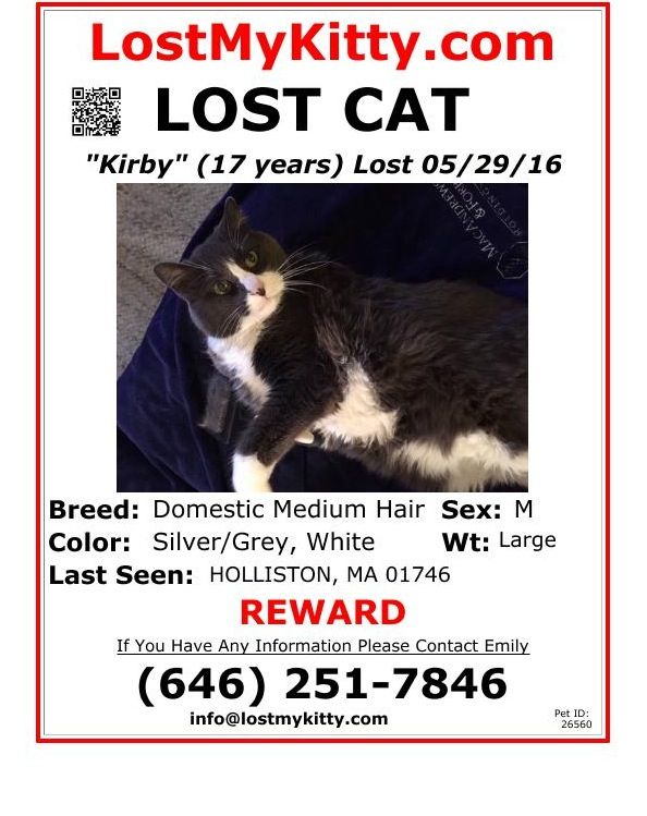 230 best Lost \ Found images on Pinterest Cats, Lost and Website - lost pet poster