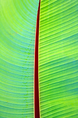I just looked up bananas on pinterest and this is the first pin that came up... :P banana leaf!