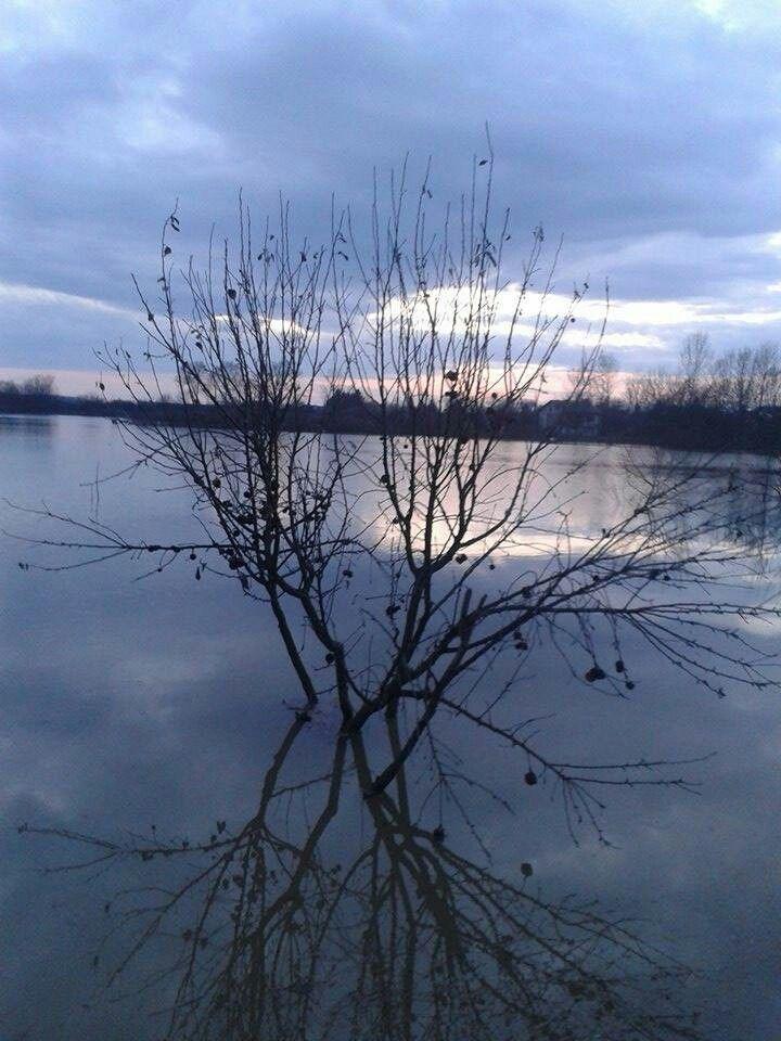 Winter disaster tree