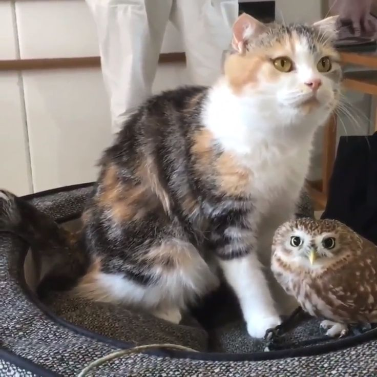 Cat and owl best friends