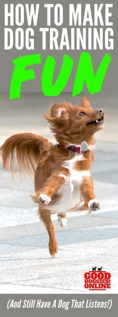 Dog training doesn't have to be boring! Check out these dog training tips to help you make it fun and still have a dog that listens and obeys. Dog behavior & training ideas for dog owners #doginformation