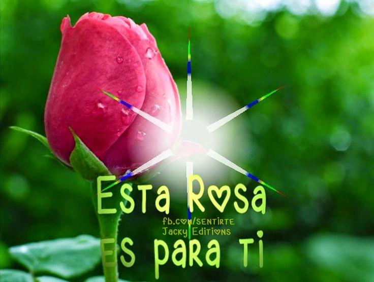 Amor Mio •ღೋεїз: descarga o comparte esta bella rosa ya!