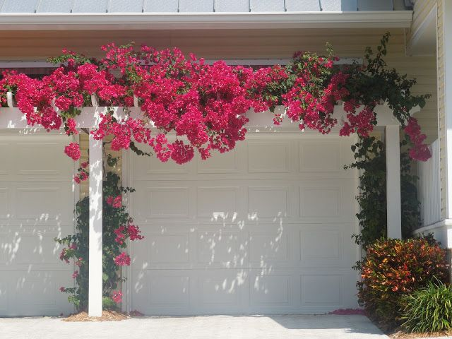 The French Tangerine: ~ naples, Pergola over garage doors, creates charm and overall curb appeal