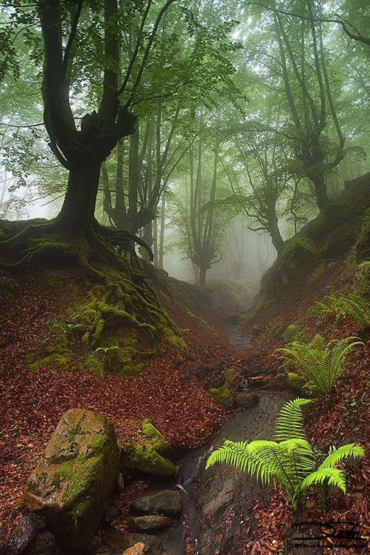 Autumn in Otzarreta Forest Gorbea Natural Park, Biscay, Basque Country, Spain