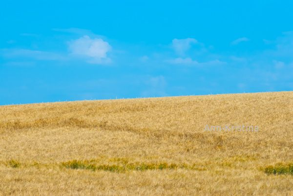 Ann-Kristinna Al-Zalimi, ohrapelto, ohra, landscape, barley field, field, finland, korn, barley