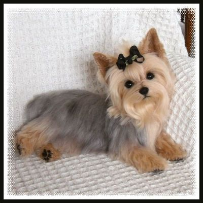 Mary Holstad Presents Life Like Yorkie Yorkshire Terrier Dog OOAK Layaway Avail | eBay