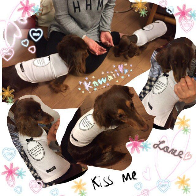 カワイイお写真届きました💕ポトフくんとリアムちゃんが、MAISONラウンドホワイトTをオシャレに着てくれました💓この度はママさんに相談させて頂いて、新たなデザインが出来上がってとても感謝しております🙏ママさんこの度もありがとうございました❤ #犬服のお店dear 💛 @dear_shop.jp 💛#チワワ#ちわわ#愛犬#ロンチー#ロングコートチワワ#chihuahua #多頭飼い#わんこ#スムースチワワ#ハンドメイド犬服#ふかふかベッド #マルチーズ #ヨークシャテリア#迷子札#犬服#カフェマット#トイプードル#ティーカッププードル#シーズー #チワックス#モデル犬#ペットグッズ#首輪 #パピー
