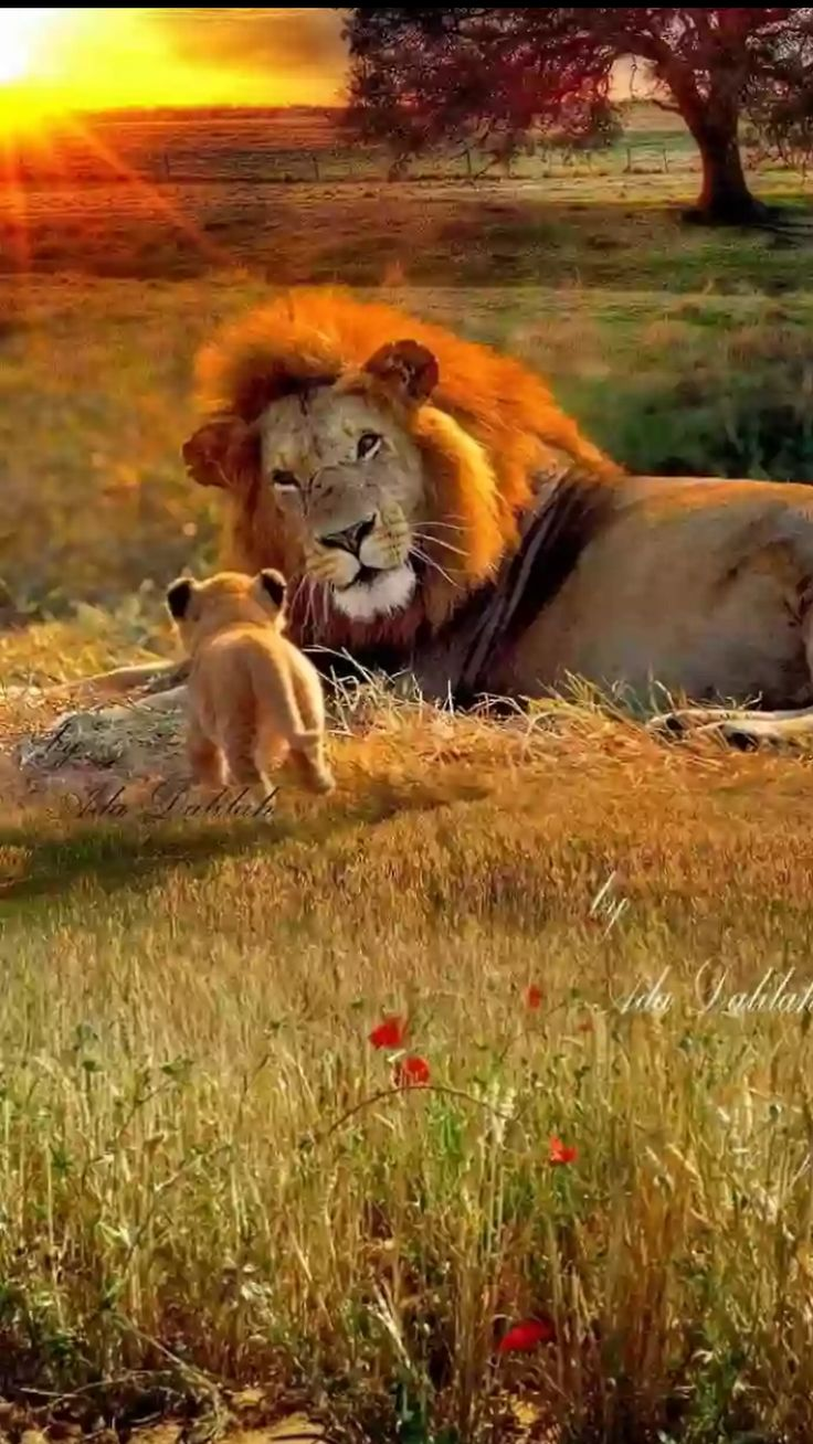Look at the pride in dad's eyes for his little fella.  What a tiny and cute baby.