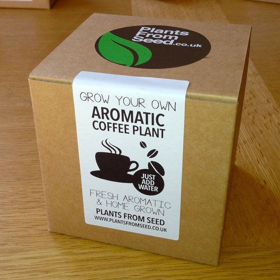 Grow Your Own Aromatic Arabica Coffee Plant Kit by PlantsFromSeed, £4.99