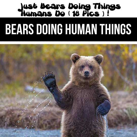 Just Bears Doing Things Humans Do (18 Pics)!