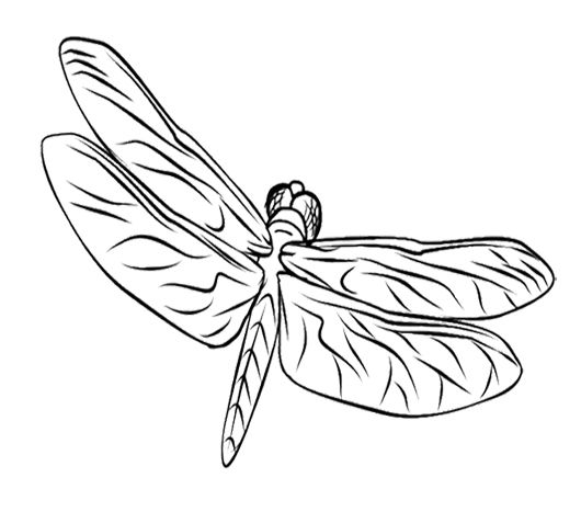 Drake & josh coloring pages ~ 17 Best images about Dragonflies on Pinterest   Coloring ...