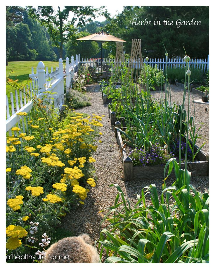 Planning Ideas for your Vegetable Garden - A Healthy Life For Me