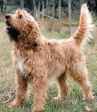 Otterhound #MustLoveDogs best dog ever! Waterproof and oily coat with web paws.