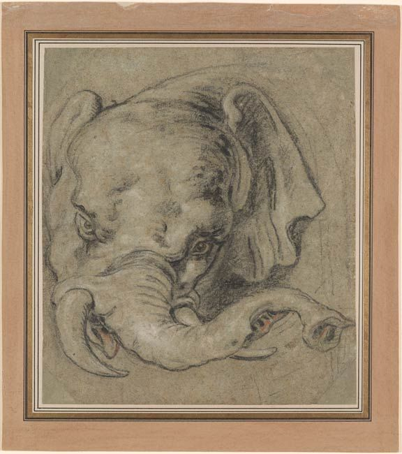 Peter Paul Rubens (1577-1640). Head of an Elephant, Black, white, and some red chalk, on greenish-gray paper, 226 x 220 mm   The Morgan Library & Museum