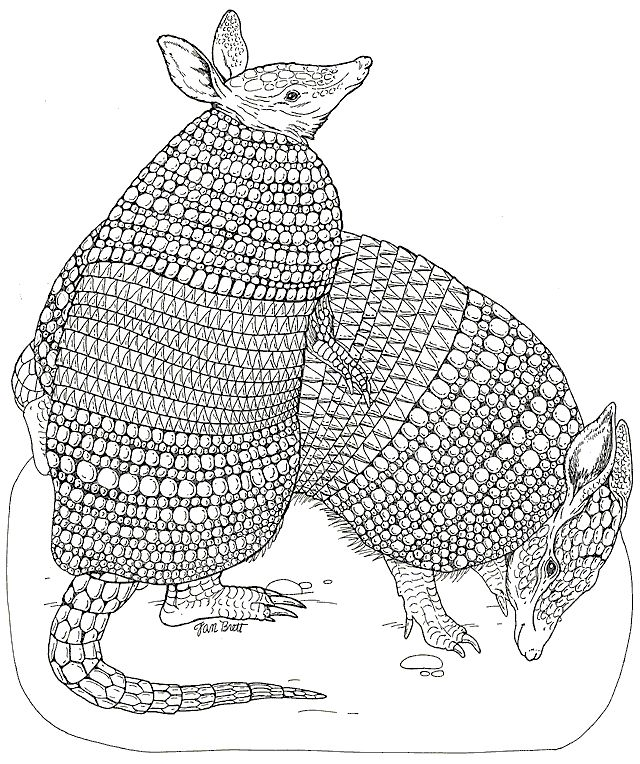 on noahs ark coloring mural armadillos coloring page for kids and adults from animals coloring pages armadillo coloring pages