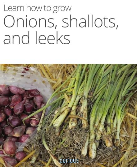 10395 best images about garden ideas and tips on pinterest for Indoor gardening onions
