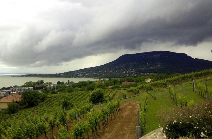 #Wine #Yards at the #lake #Balaton #Hungary  #Europe #wine #winery