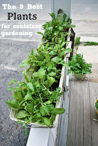 The best plants for container gardening! Want to figure out what will work best for your yard and space? I've got tips for you! #gardening #frugalliving #tips
