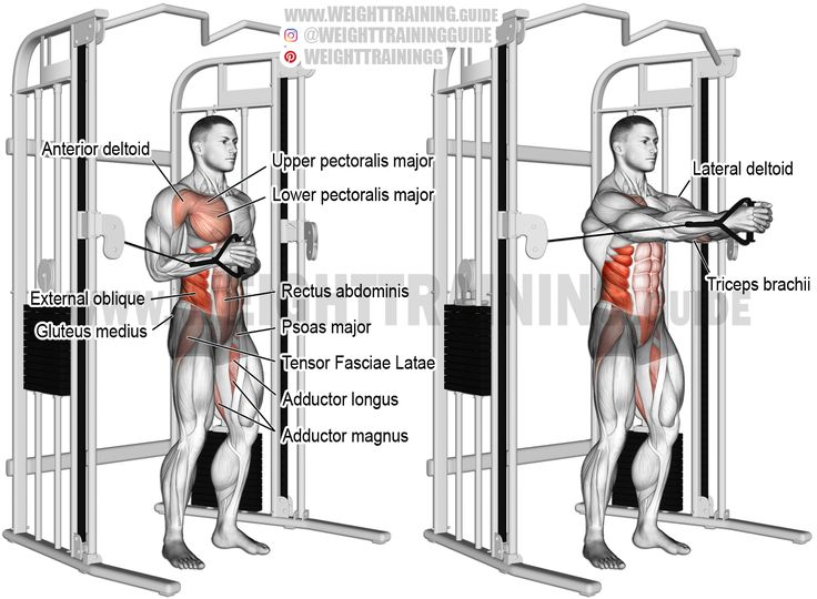 Cable horizontal Pallof press exercise instructions and