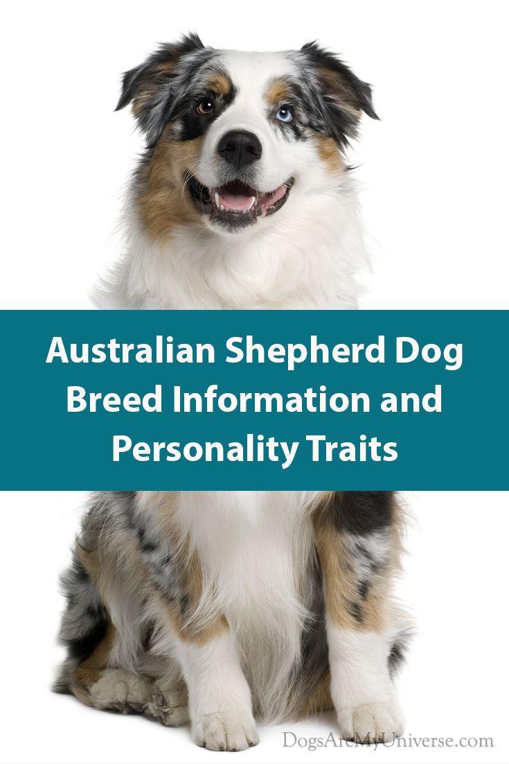 Australian Shepherd – Breed Information