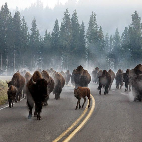 weekend escape: Bozeman, Montana via @antiquearch0090