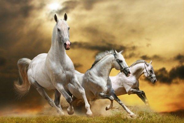 caballos finos - Buscar con Google