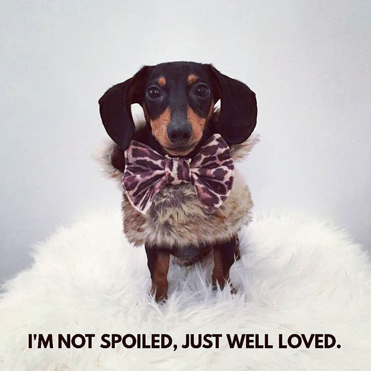 So true... .  @mini_mason_dachshund