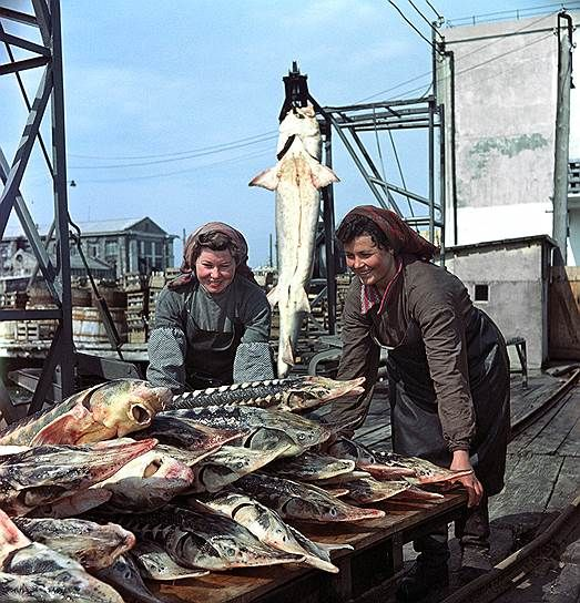1955 год. Керченский рыбокомбинат