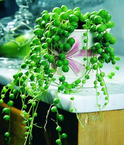 Die 25+ Besten Ideen Zu Zimmer Sukkulenten Auf Pinterest ... Sukkulenten In Korkstopsel Anlegen Eine Tolle Deko Idee