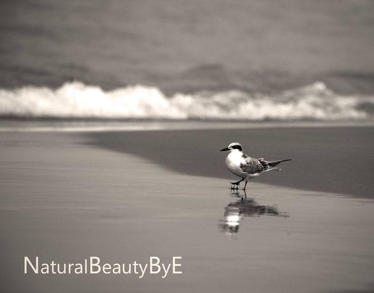Shore bird print, sandpiper on beach art print, Lake Huron summer sandpiper, beach photo, bird wall art, outdoor nature print, fine art by NaturalBeautybyE on Etsy