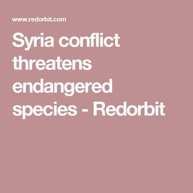 Syria conflict threatens endangered species - Redorbit