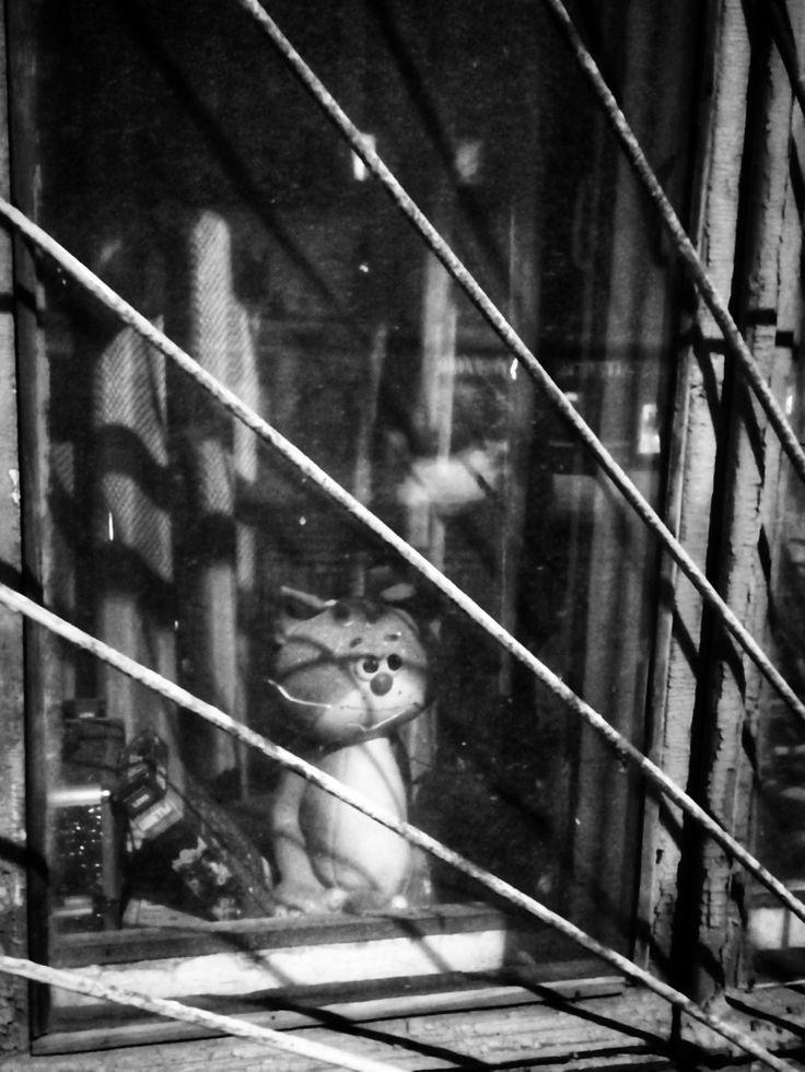 Грустный котёнок с улицы Лизюкова 😉 Я не помню, о чём ...