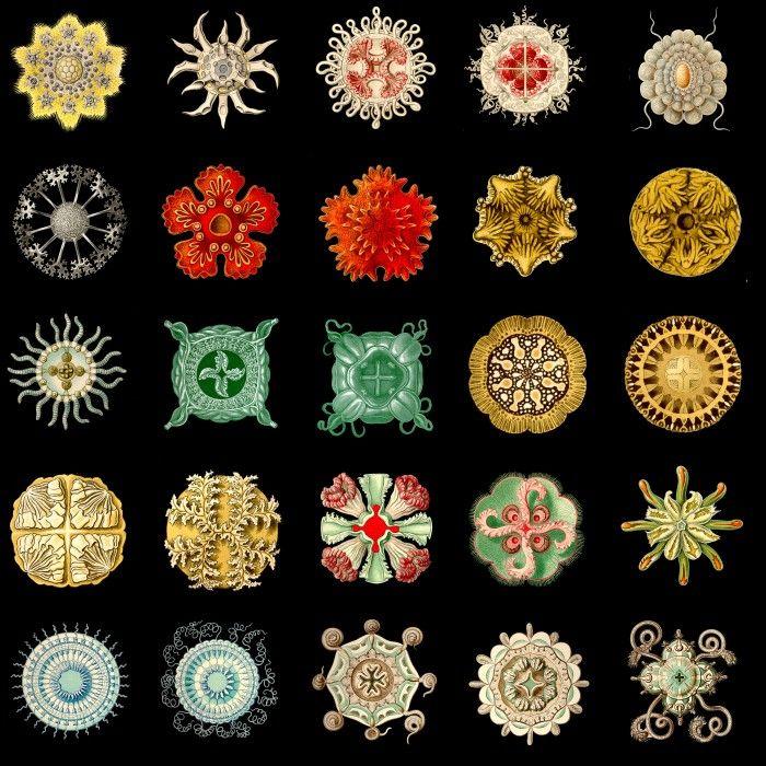 Geometria ed arte: la simmetria radiale | DidatticarteBlog