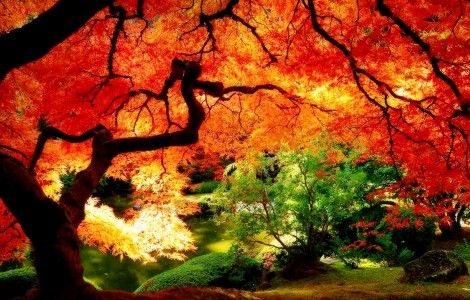 beautiful big autumn tree
