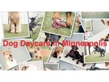Leaving your dog alone all day, may cause him to get destructive. But you can give your dog a enjoyable fun session with other dogs as well as human company. And the place where you will get such an environment is dog daycare Bloomington