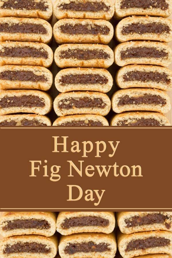 Homemade Fig Newton Bars Recipe Homemade Fig Newtons Fig Newtons Fig Recipes