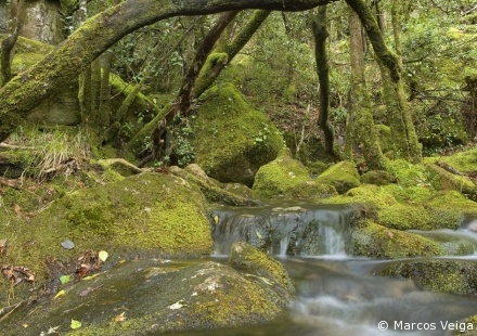 Mediterranean forest in Peneda-Geres National Park  http://www.panparks.org/visit/our-parks/peneda-geres-national-park