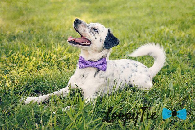 Dog Collars – Rainbow Violet Stripes Purple Bow Tie Dog Collar – a unique product by LoopyTie on DaWanda