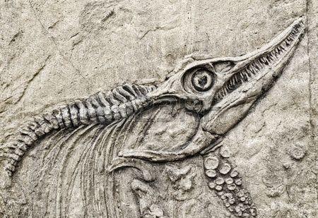 Dinosaurier Skelett Lizenzfreie Bilder