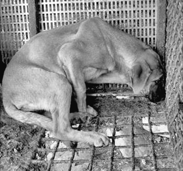 TRACE2#AnimalRights (@trace2_trace2_) | Twitter    ❗TY to share awareness about the cruel #DogMeatTrade in #SouthKorea using this site👉https://sites.google.com/site/stopkoreantorture/home …❗PLS DON'T STOP TO TWEET❗