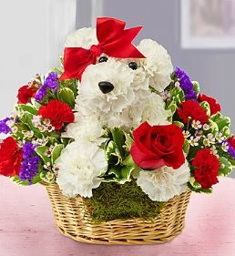 Love Pup Our precious pup is the pick of the litter! Handcrafted from red and white carnations, it arrives in a basket, clutching a single red rose and finished off with a sweet red bow. Whether you'r