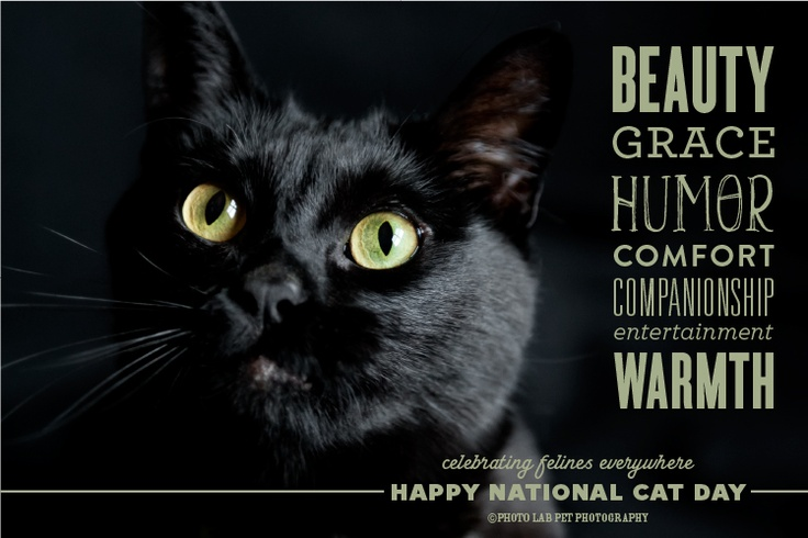 ©Photo Lab Pet Photography celebrates National Cat Day: