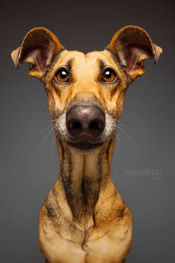 Biometric Passport Picture by Elke Vogelsang on 500px