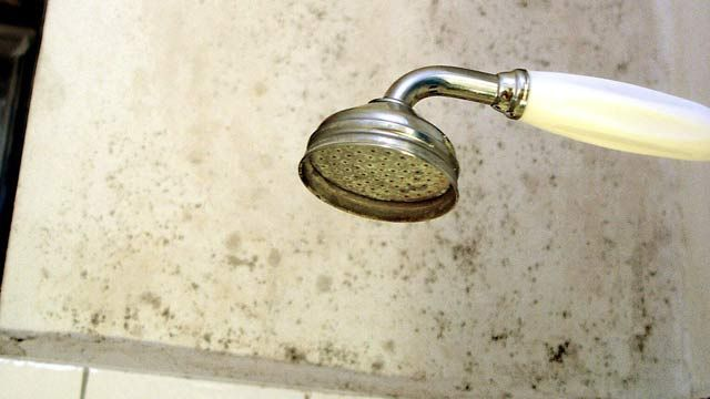 Schimmel in der Wohnung schadet der Gesundheit. (Quelle: dpa/Florian Oertel)