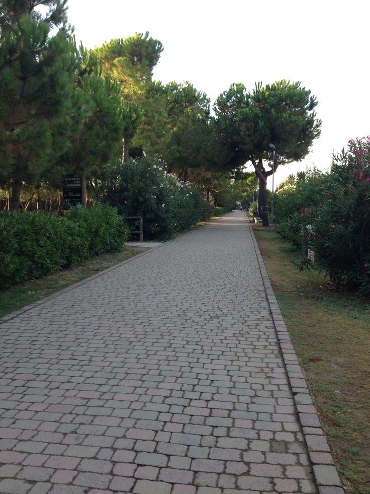 Pineto (Abruzzo) Italia