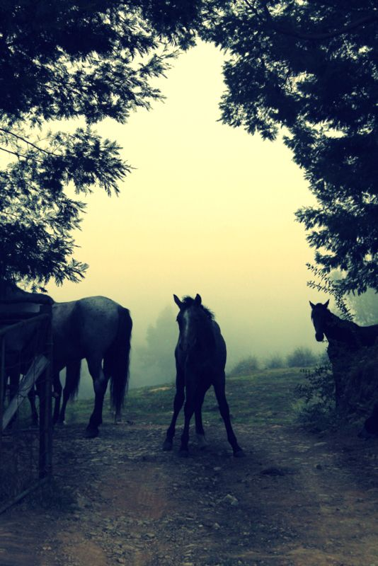 Through the mist. Hogsback, South Africa**